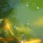 fish4